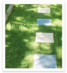 Backyard Turf by J & B Buffalo Turf Supplies
