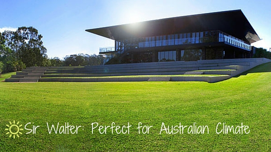 Sir Walter_ Perfect for Australian Climate