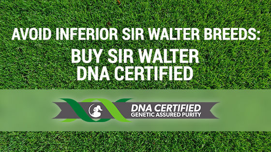 look for sir walter dna certified grass