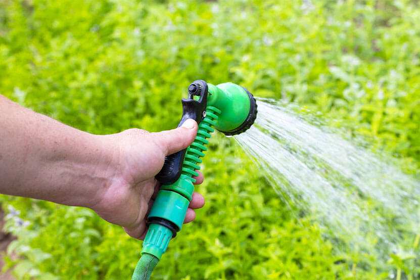 The right time to water your grass