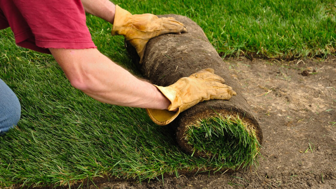 When is the best time to plant turf?